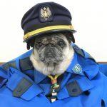 アイシン警備のアイドル犬